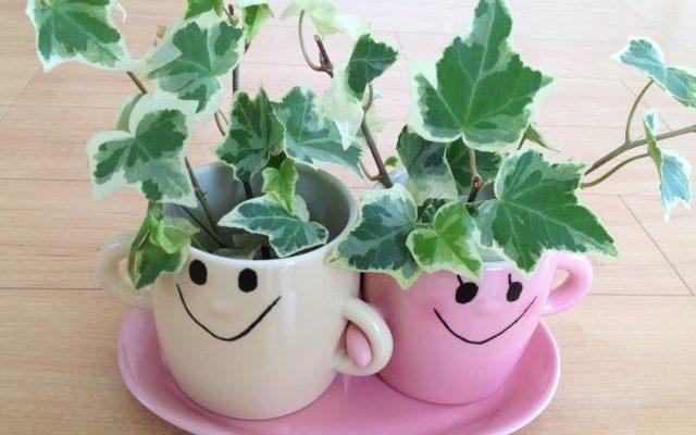 2つの植木鉢